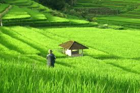 petani